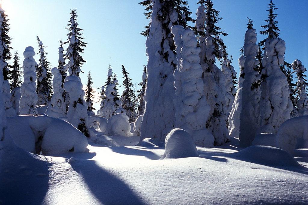 Зимний лес на горе Киваккатунтури