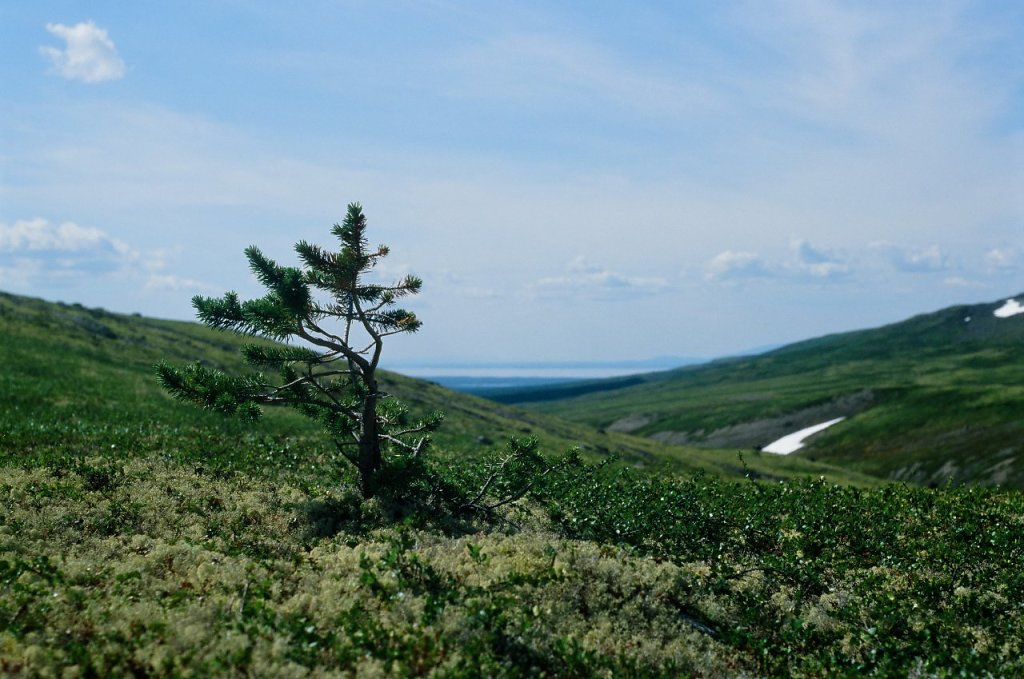 В южной части Ловозерских тундр