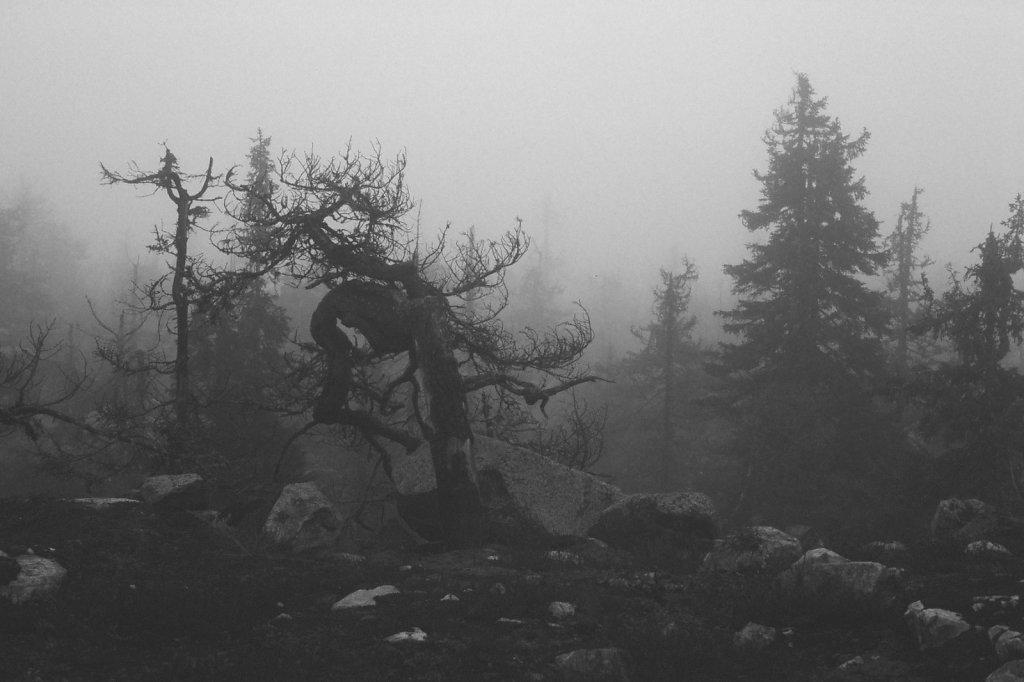 fog-vottovaara-blog-01.jpg