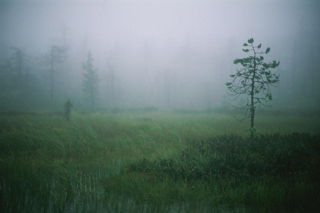fog-vottovaara-blog-26.jpg
