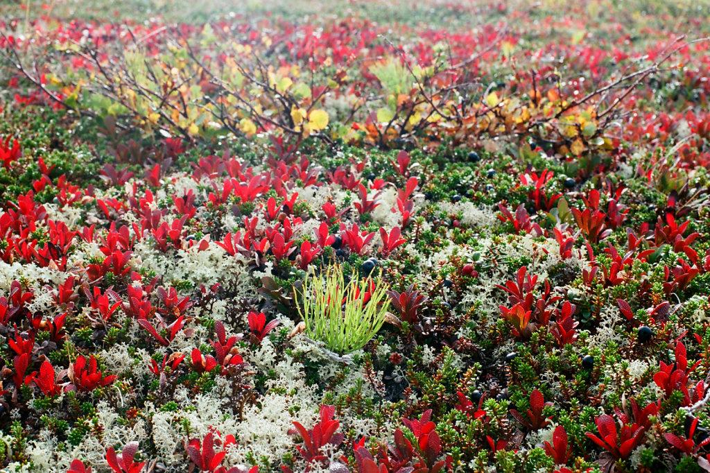 Осенние цвета тундры