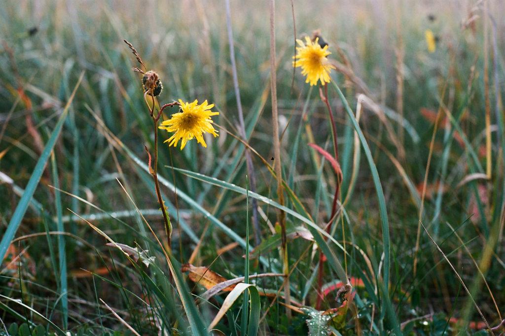 Цветы в вечернем свете