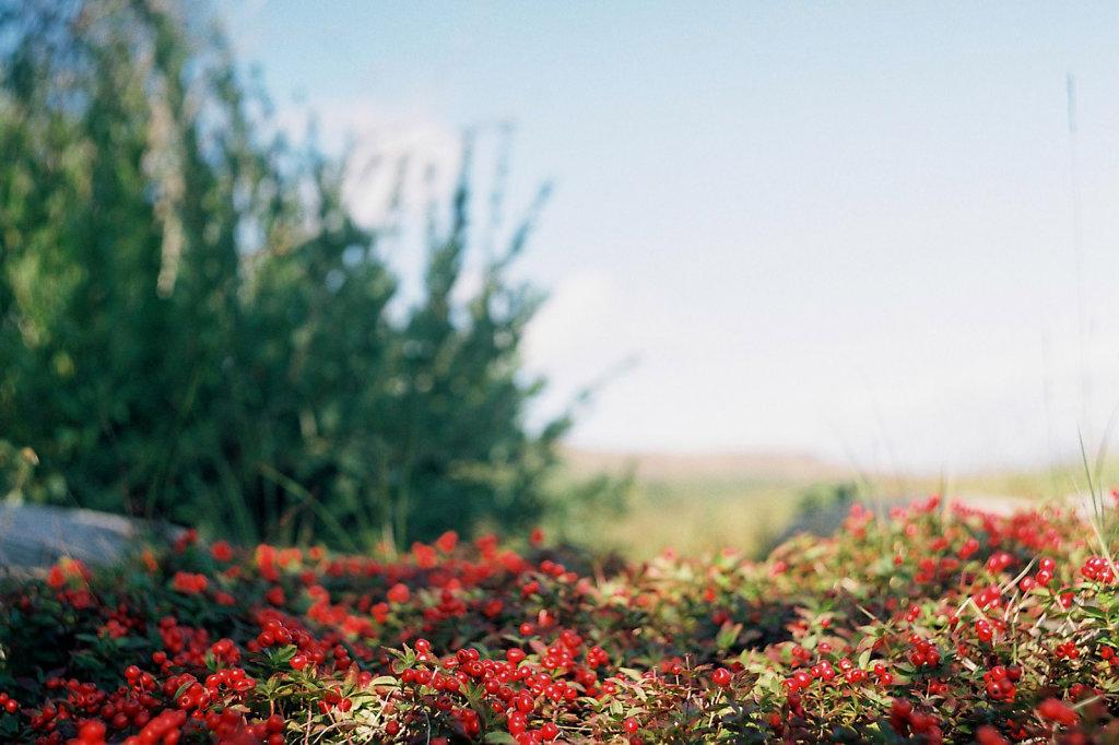kuzova-flora-blog-02.jpg