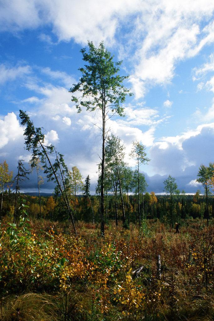 blog-kareia-fall-12.jpg