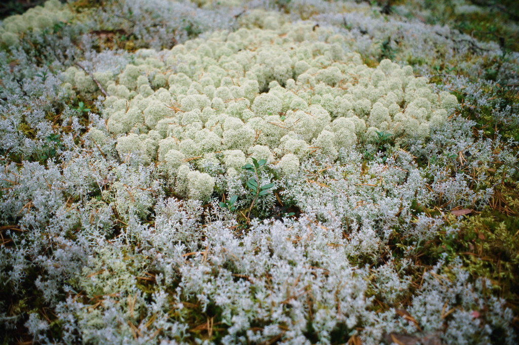 blog-kareia-fall-19.jpg