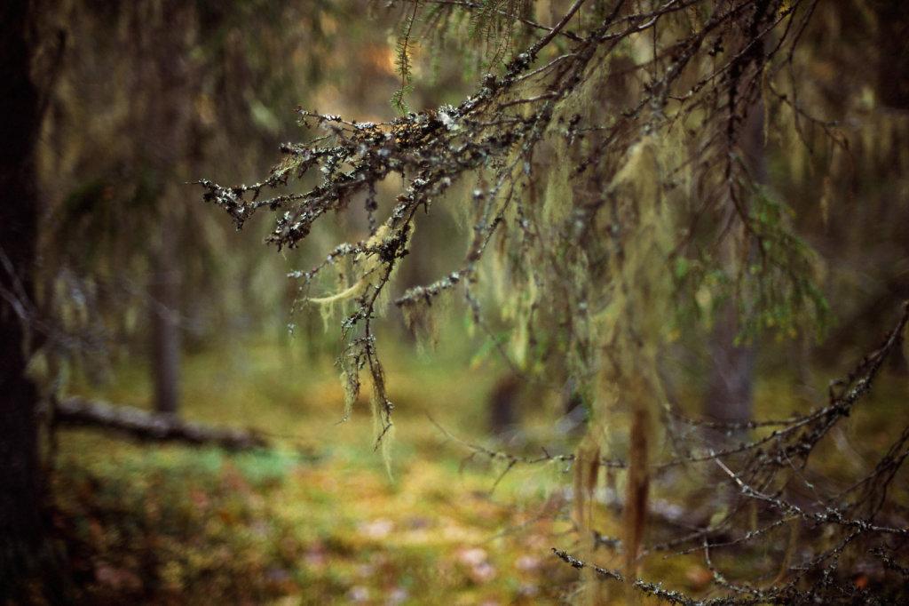 blog-fall-lunas-13-41.jpg