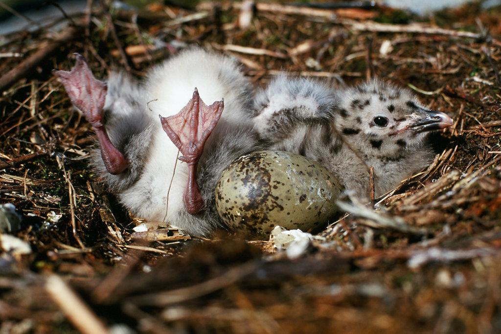 birdwatching-hanhipasi-blog.jpg