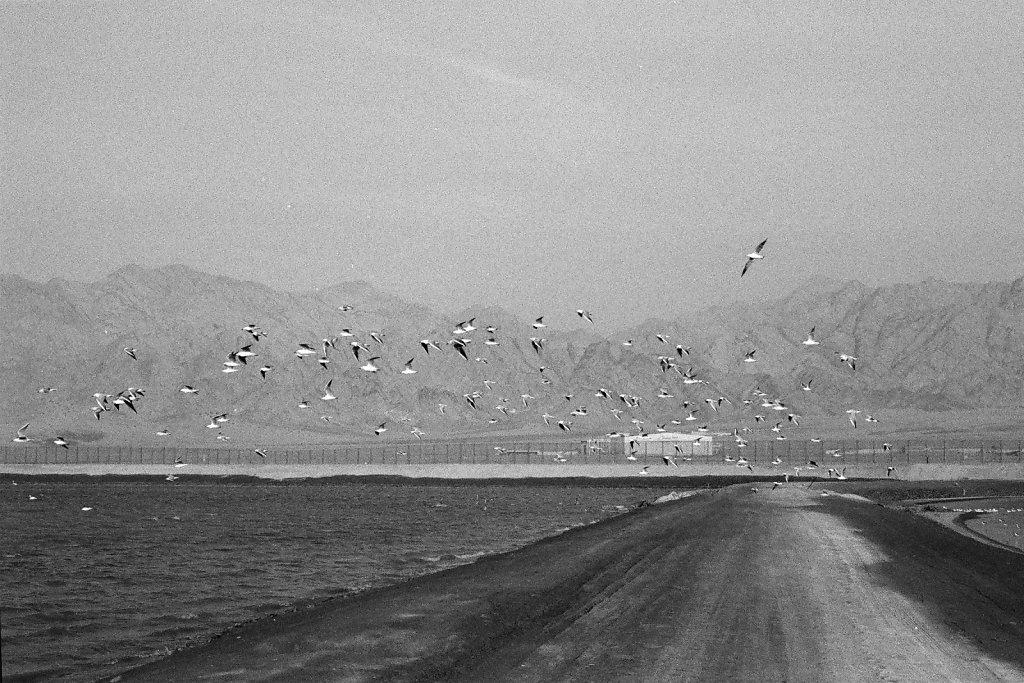 Eilat-036-web.jpg