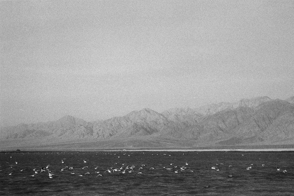 Eilat-039-web.jpg