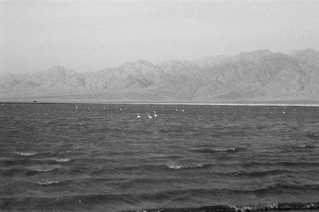 Eilat-040-web.jpg