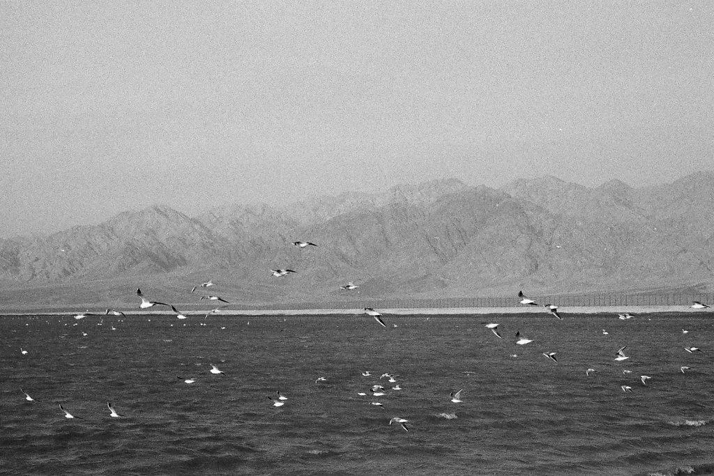 Eilat-043-web.jpg