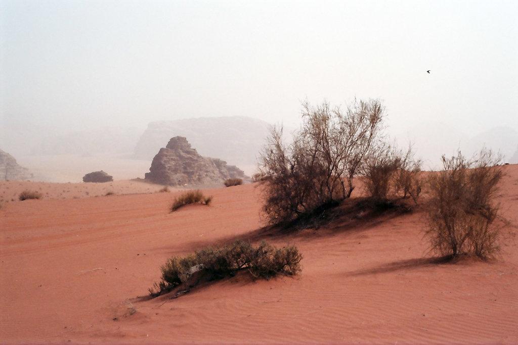 Jordan-274-web.jpg