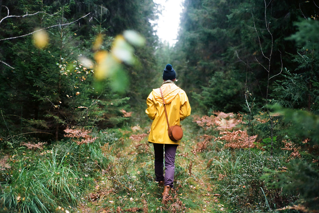 В лесах Карельского перешейка   Karelian isthmus