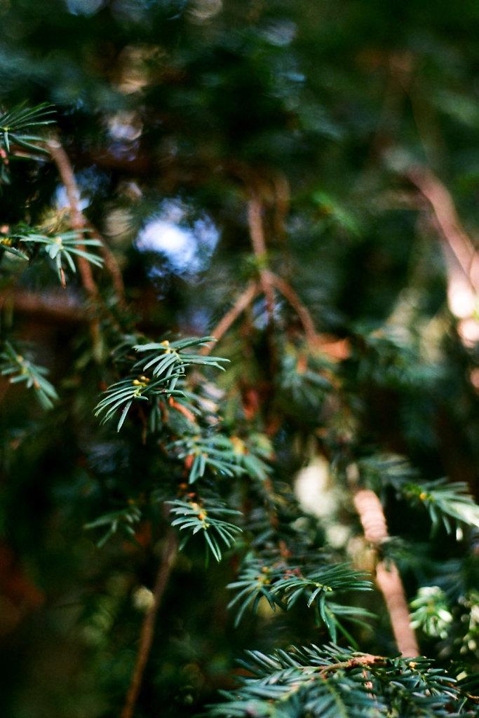 madeira-46-web.jpg
