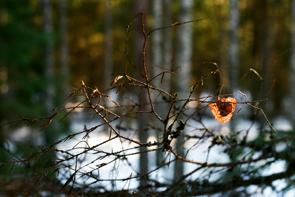 raudsilla-winter-03-web.jpg