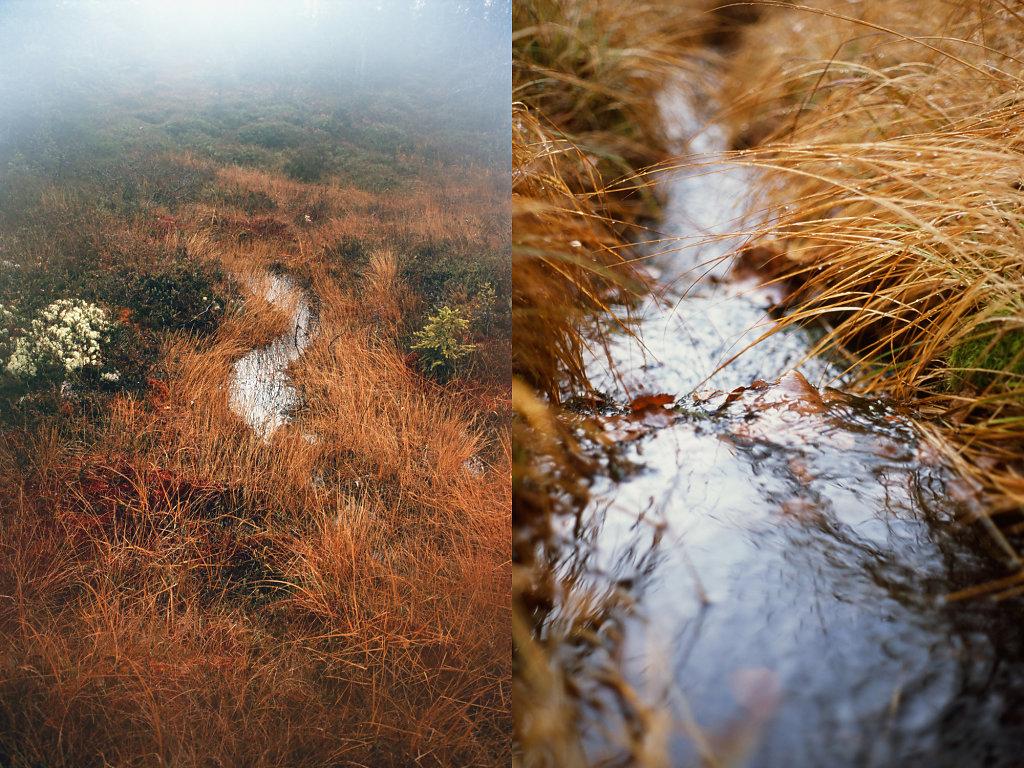 Lunas-fall-site-01.jpg