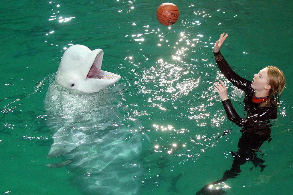 dolphin-01-blog.jpg