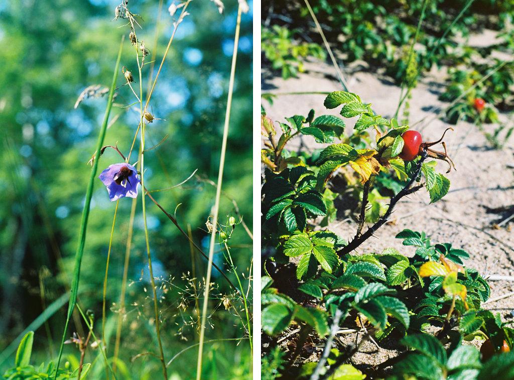 naisaar-flowers-site.jpg